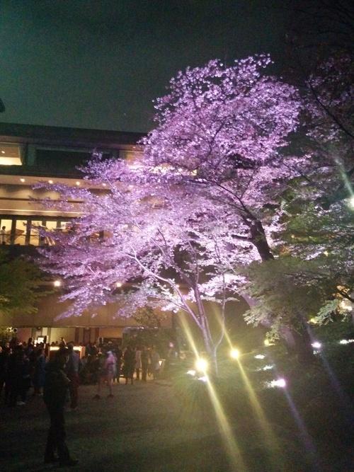 老舗シャトー勝沼のワインと夜桜ビュッフェ@八芳園_e0123104_921197.jpg