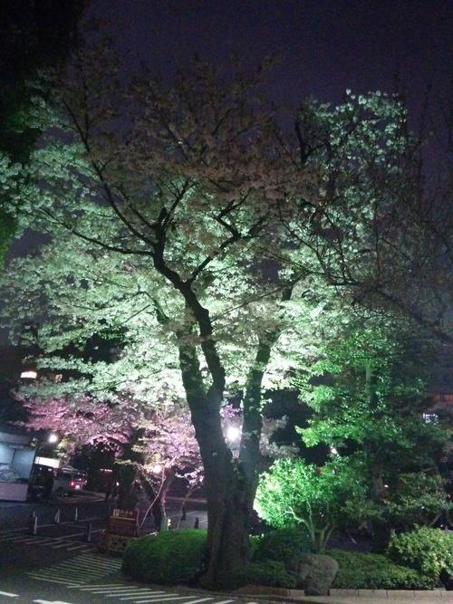 老舗シャトー勝沼のワインと夜桜ビュッフェ@八芳園_e0123104_994979.jpg