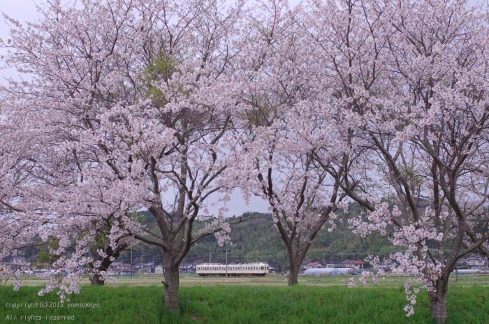 桜並木のたもとで_d0309612_162022.jpg
