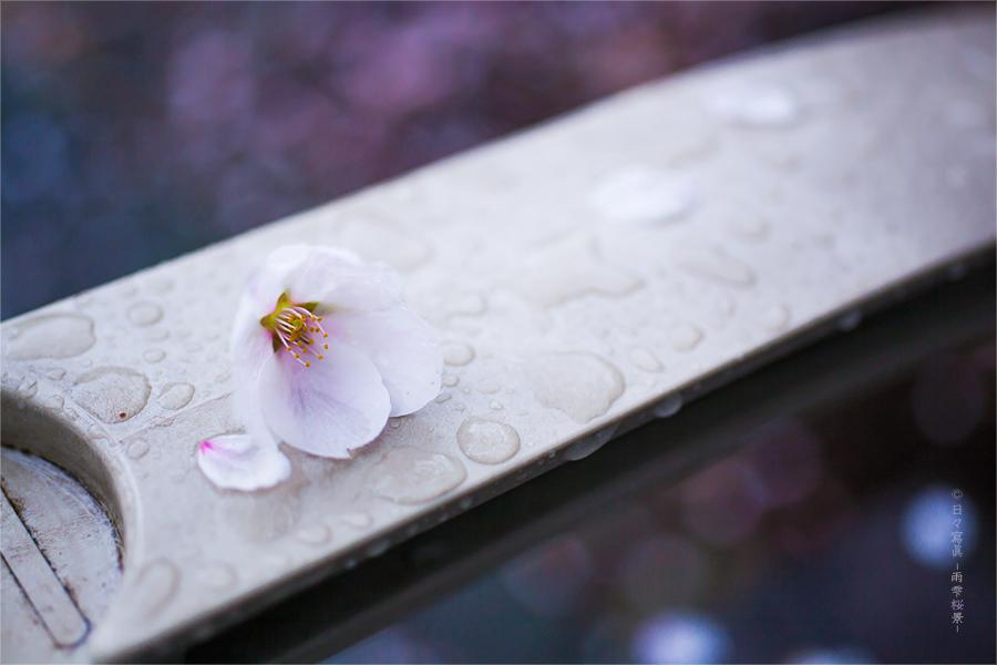 花 冷 え に  …_e0117517_22422386.jpg