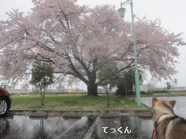 f0143123_19495960.jpg