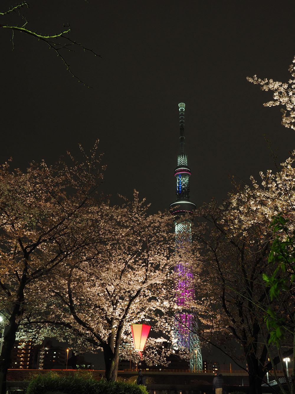 東京スカイツリーと桜_f0324026_440880.jpg
