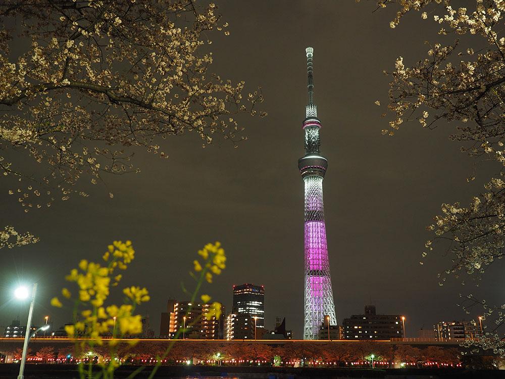東京スカイツリーと桜_f0324026_4421269.jpg