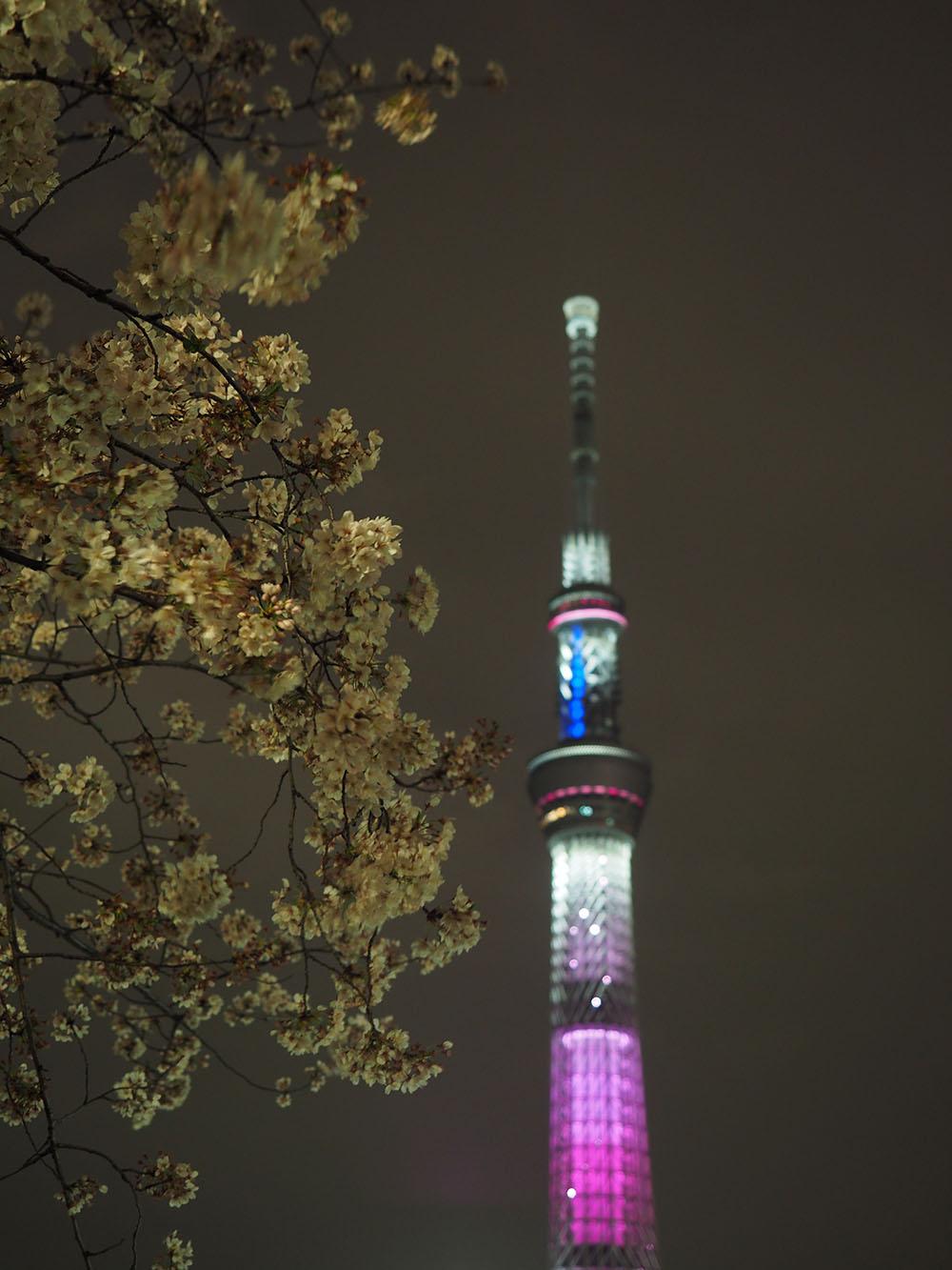 東京スカイツリーと桜_f0324026_442302.jpg