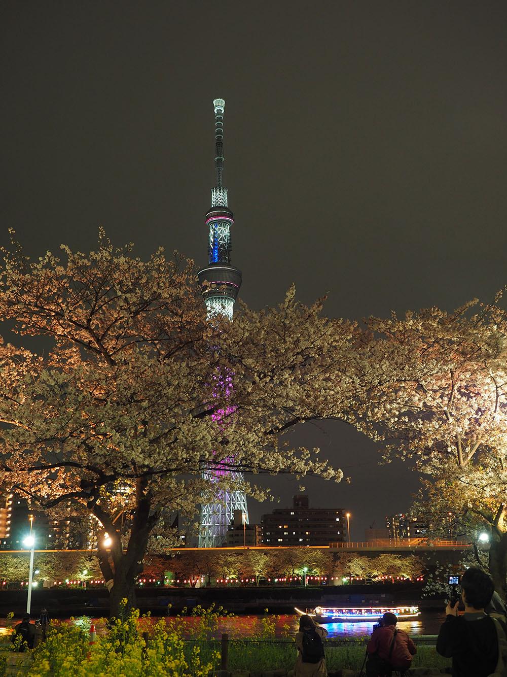 東京スカイツリーと桜_f0324026_57149.jpg