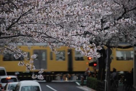 臨時の雑感 ~ひとひら(桜桃記)~_e0030537_01232393.jpg