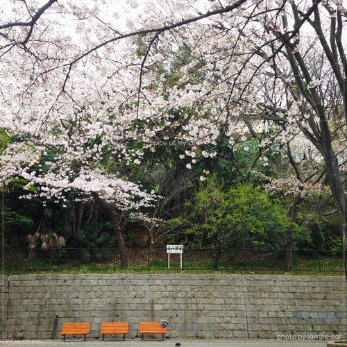 桜の宴_f0151946_042275.jpg
