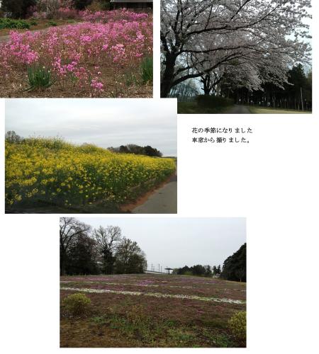 花の季節_e0109554_19013733.jpg
