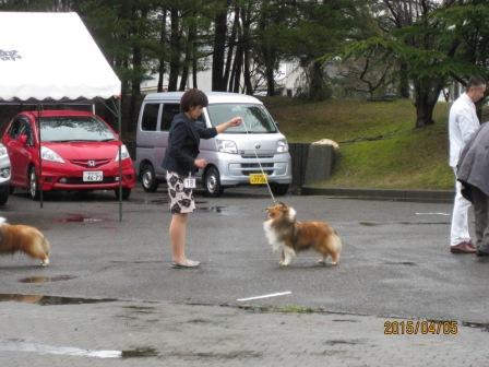 4.5(日) JCC新潟展_a0139367_21312664.jpg
