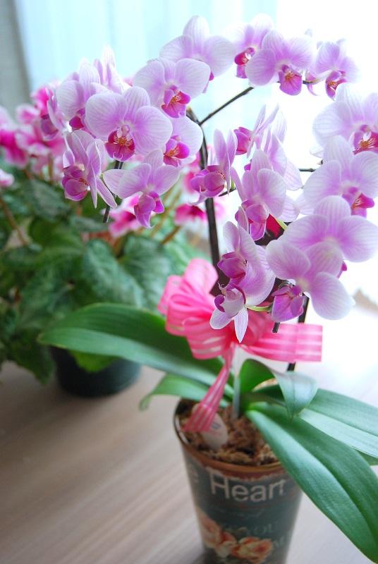 「願わくば・・・」桜とお祝い会を。_b0165872_16383136.jpg