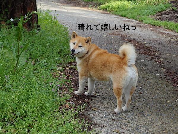 b0088173_2011624.jpg