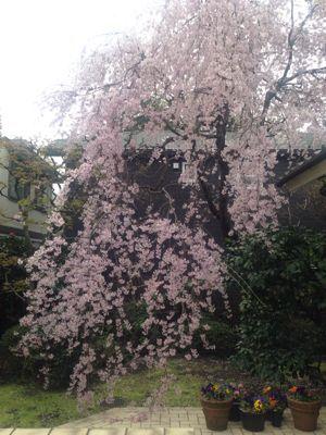 女魯山人先生のお花見の会_e0326573_17162417.jpg