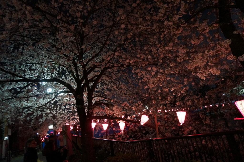 恵比寿のAMPELMANN Cafe Tokio_c0180686_11285284.jpg