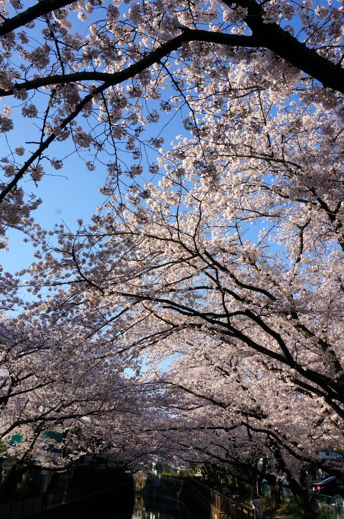 恵比寿のAMPELMANN Cafe Tokio_c0180686_11304812.jpg