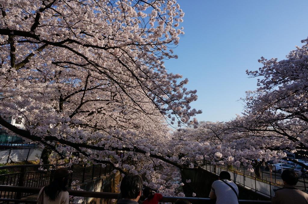 恵比寿のAMPELMANN Cafe Tokio_c0180686_11310700.jpg