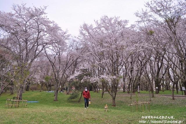 お花見散歩_a0126590_07471340.jpg
