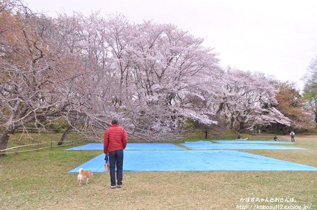 お花見散歩_a0126590_07472032.jpg
