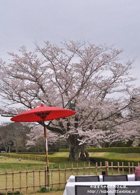 お花見散歩_a0126590_07473127.jpg