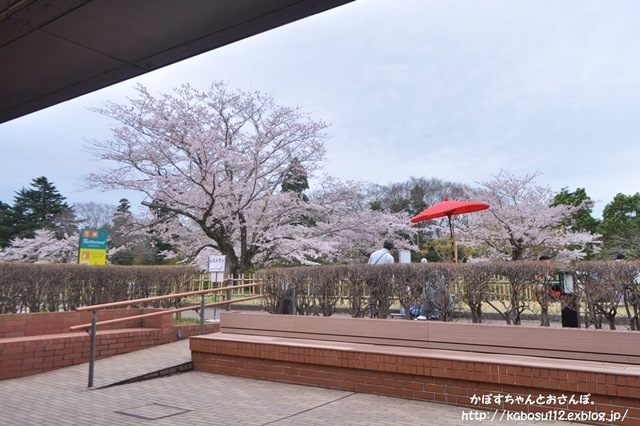 お花見散歩_a0126590_07474953.jpg