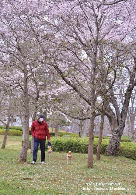 お花見散歩_a0126590_07484145.jpg