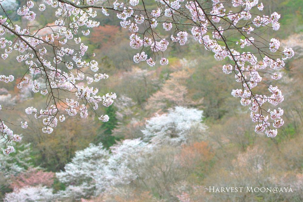 瞬春_b0208495_229429.jpg