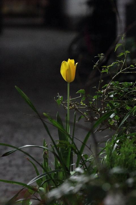 裏路地に咲く花_b0190710_6553726.jpg