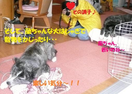f0121712_16113030.jpg