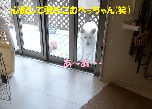 f0121712_16364511.jpg