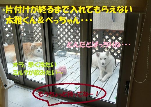 f0121712_1637230.jpg