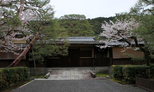 細川別邸と野村別邸 2015サクラ情報29_e0048413_20574856.jpg