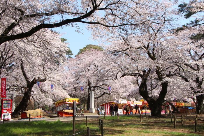 ' 15年 大宮公園   桜 ・ さくら ・ サクラ_d0150720_1001780.jpg