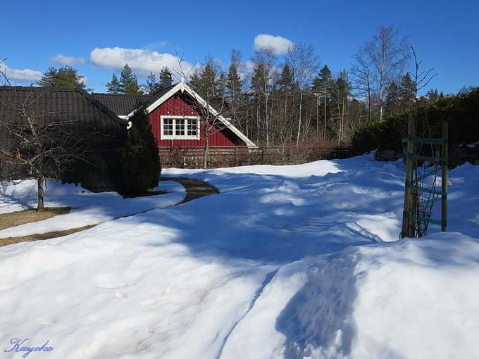 庭の雪_a0086828_1861788.jpg