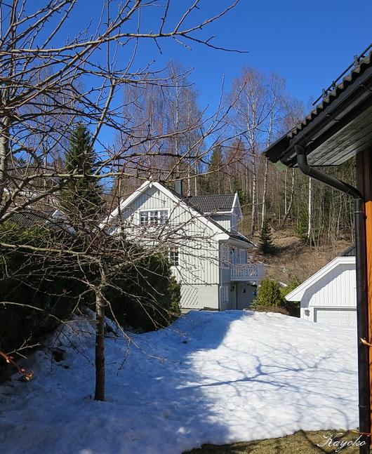 庭の雪_a0086828_1881663.jpg