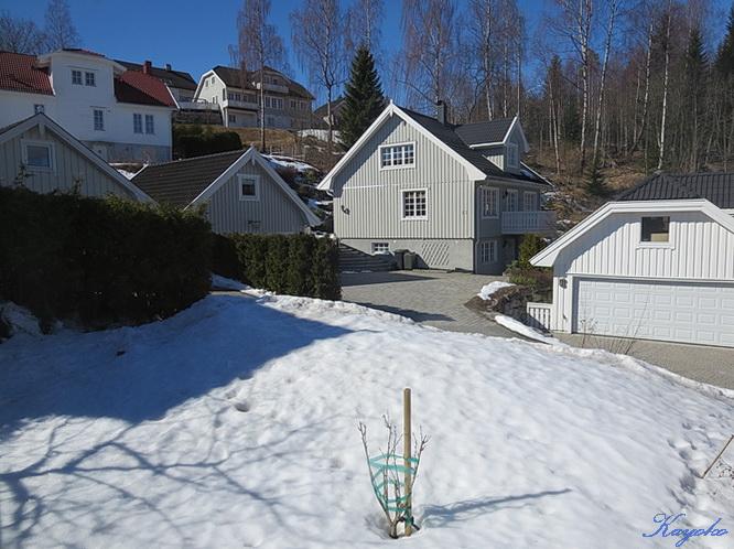 庭の雪_a0086828_1884154.jpg