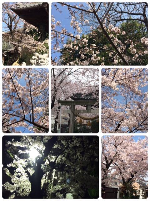 お花見   2_a0106637_144338.jpg