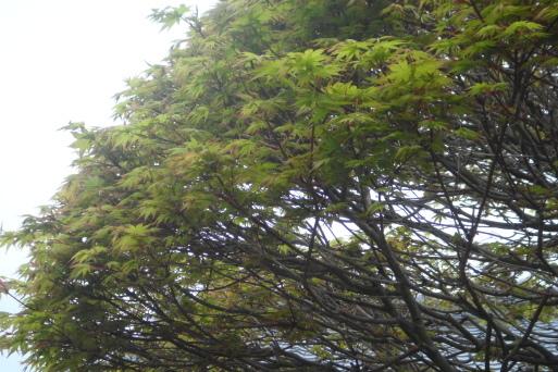 枝の動き_e0226943_23182060.jpg
