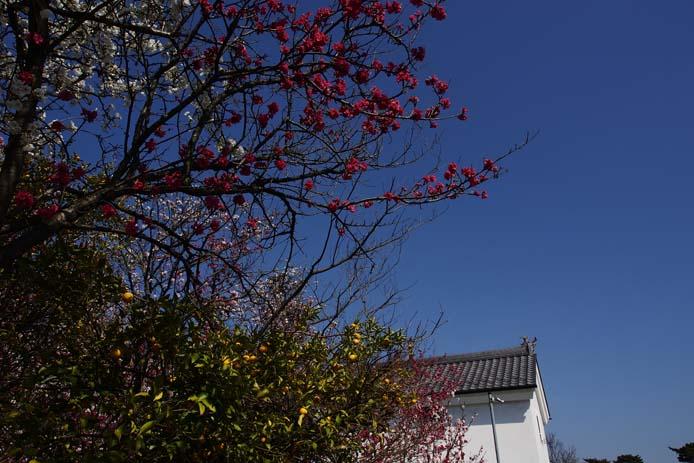 春、色とりどり_d0149245_2037191.jpg