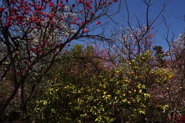 春、色とりどり_d0149245_203730100.jpg