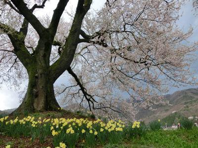 桜曇り_f0019247_1905735.jpg