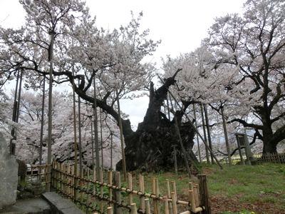 桜曇り_f0019247_1915333.jpg