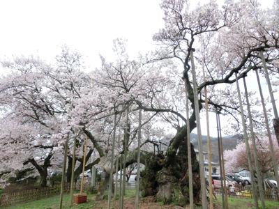桜曇り_f0019247_1935757.jpg