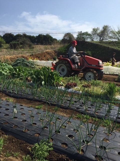 今朝は昨日の雨が残り 草刈りやこまごました畑のメンテナンスです。_c0222448_14515870.jpg