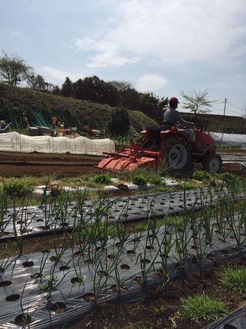 今朝は昨日の雨が残り 草刈りやこまごました畑のメンテナンスです。_c0222448_14521555.jpg