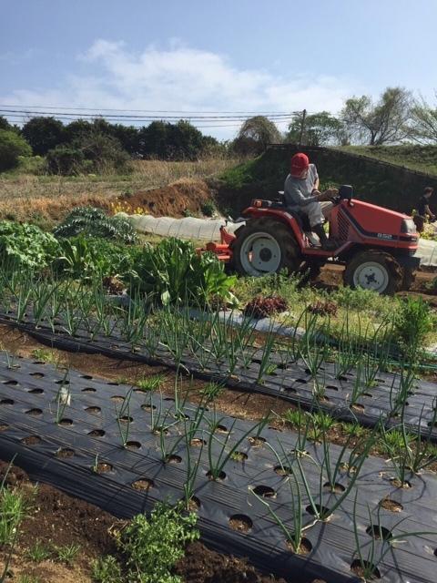 今朝は昨日の雨が残り 草刈りやこまごました畑のメンテナンスです。_c0222448_14525109.jpg