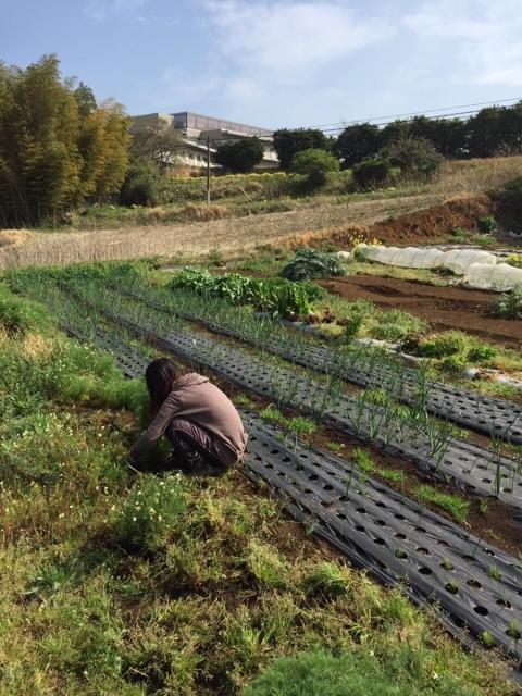 今朝は昨日の雨が残り 草刈りやこまごました畑のメンテナンスです。_c0222448_14571548.jpg