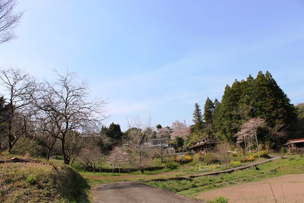 桜..さくら..サクラ❀_a0174458_23564676.jpg