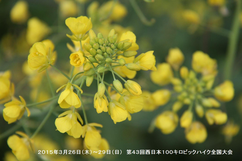第43回西日本100キロビックハイク全国大会ー3_b0220064_15142718.jpg