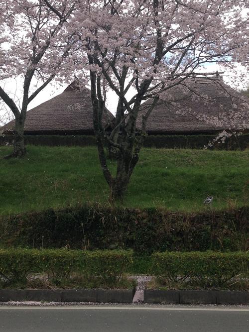 4/4 季節の食卓 toki no syokutaku_b0207676_23421438.jpg