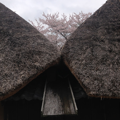 4/4 季節の食卓 toki no syokutaku_b0207676_23423452.jpg