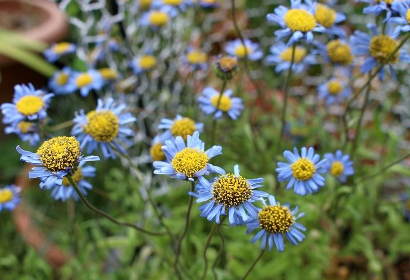 f0165677_20040921.jpg